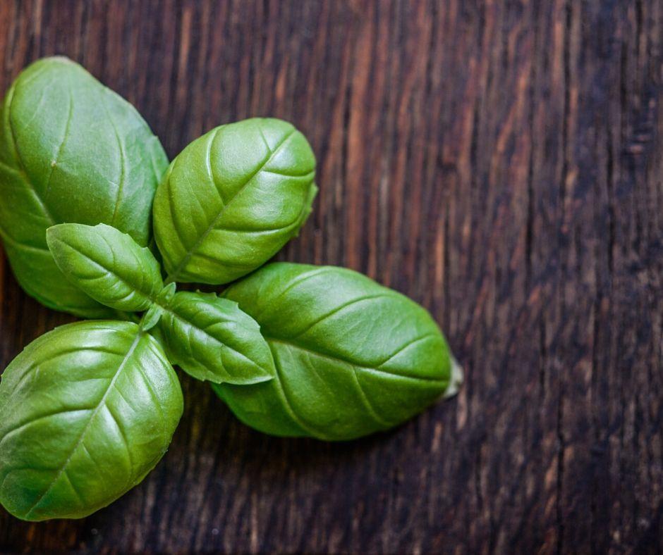 Bazalka bylinky pro vsechny