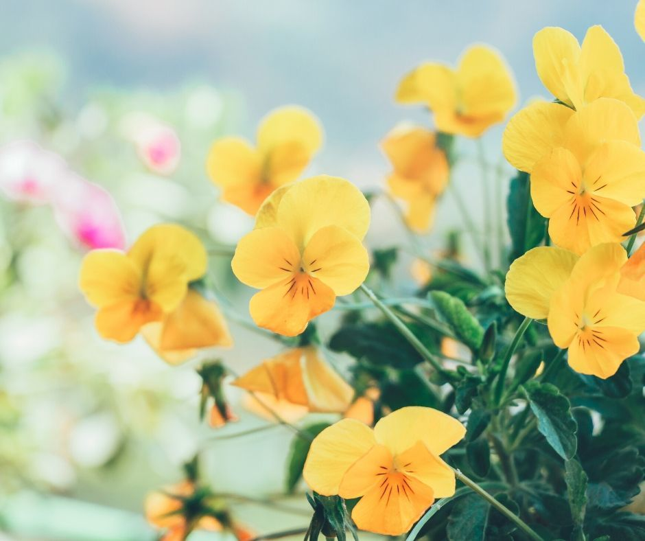 kvetova terapie